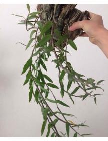 Trọn bộ dưỡng cây sau khi ra hoa.