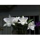 Cat. Hawaii hoa trắng tuyền